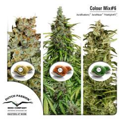 Purple No-1