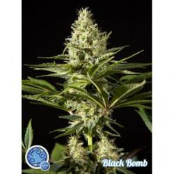 Black bomb