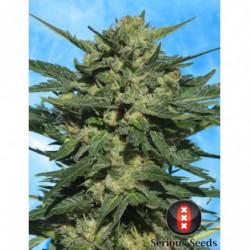 Bud Factor X 23 L