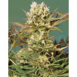 Bud Ignitor 500 ml