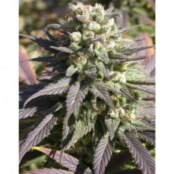 CarboLoad Liquid 4 L