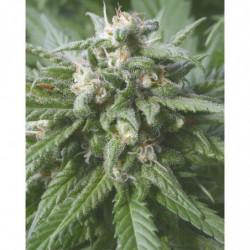 CarboLoad Liquid 23 L