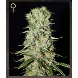 Overdrive 4 L