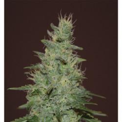 Big Bud Liquid 23 L