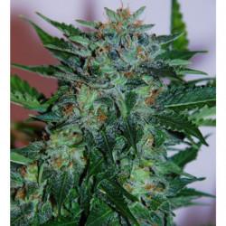 Big Bud Liquid 500 ml