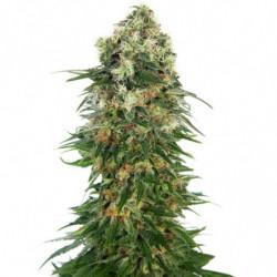 Big Bud Coco Liquid 4 L