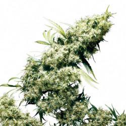 Jungle Juice Grow 4 L