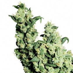 Jungle Juice Grow 10 L