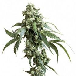 Jungle Juice Bloom 4 L