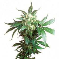Bio defence 1+2 250 ml