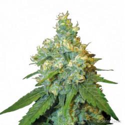 Ata-XL 1 L
