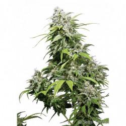 ATA-Clean 250 ml