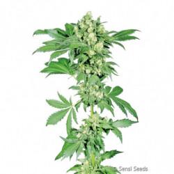 ATA-Clean 1 L