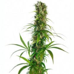 ATA Coco Max A 10 L