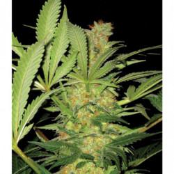 Funky Fungi 50 g