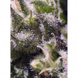 Organic grow 250 ml