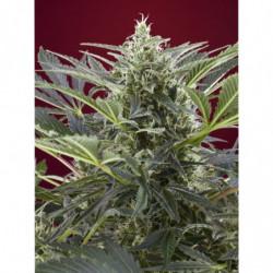 Organic Bloom 250 ml