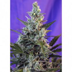 Organic Bloom 500 ml