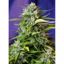 Fast Food mineral 750 ml