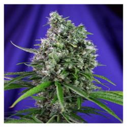 Bio Grow 1 1 L