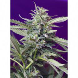 Bio Grow 1 5 L