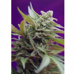 Bio Bloom 2 1 L