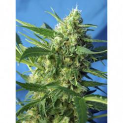 Bio Bloom 2 5 L