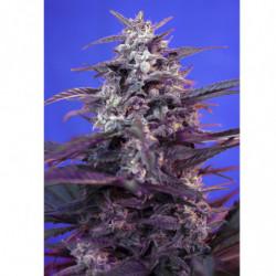 Bio Bloom 2 250 ml