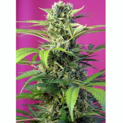 Bio Grow 250 ml