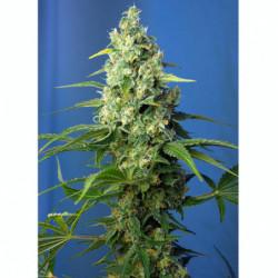 Bio Bloom 250 ml
