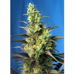 Bio Bloom 1 L