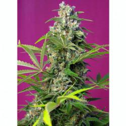 Bio Bloom 5 L