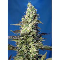 Alg A Mic 1 L