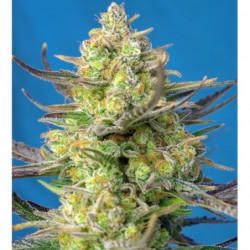 Bio Heaven 1 L