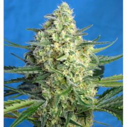 Top Max 500 ml