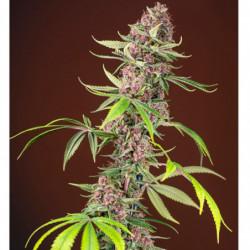 Top Max 1 L