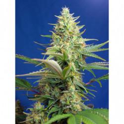 CalMag 250 ml