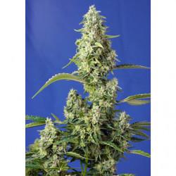 Leaf Coat Spray 500 ml