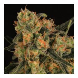 Bio PH+ 250 ml