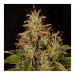 Bio PH+ 500 ml