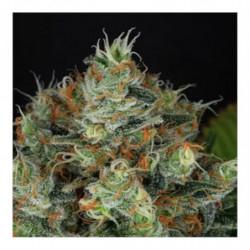 Bio PH+ 1 L