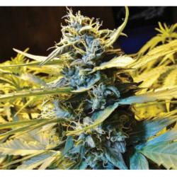 The Missing Link 1 L