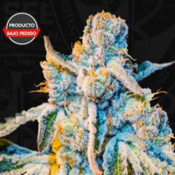BN Roots 1 L