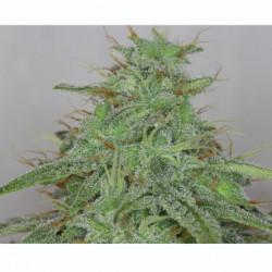 Coco Forte A 1 L