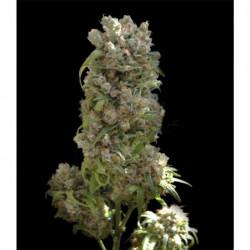 Longflower supermix 1 L