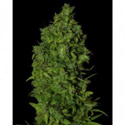 Veganics Grow 1 L