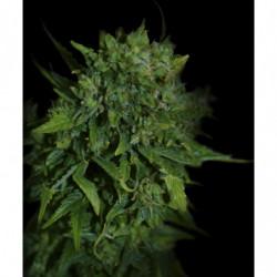 Biotabs tabletas 100uds