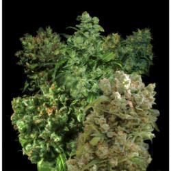 Bio Flores 5L