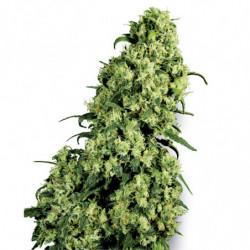 Bio Rhizotonic 5L
