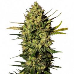 Bio Boost 10L